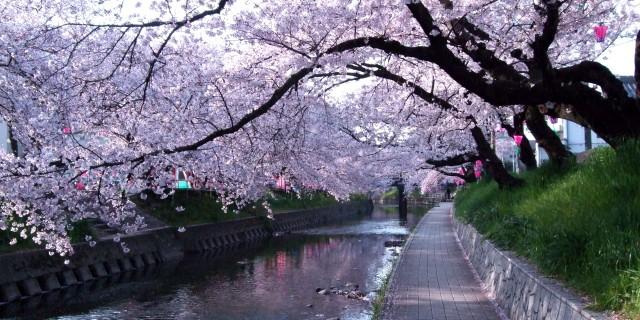 日本の美意識、「非対称」の美しさ