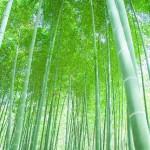 便利な竹の使い道